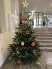 Schule ohne Rassismus - Weihnachtsbaumaktion 7. 12. 2020